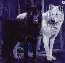 My name is Shade