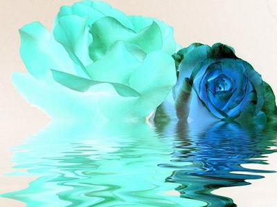 Blue rose...