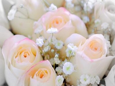 lovely rosas