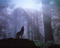 cadastrar-se forest pack if you amor lobos and want to be one just procurar forest pack on fanpop