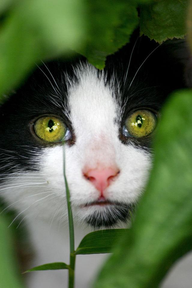 WaterClan Cats - Waterclan (warrior cats) - Fanpop