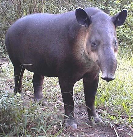 This animal