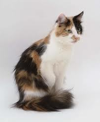 Hi!!i'm gonna be fernfall,a very beautiful longfurred tortoiseshell shecat with pale green eyes.(shes