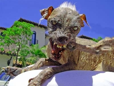 Hey Melissa :) !  I kinda agree with you that dog isn't that ugly... But this one is [b]really[/b] gr