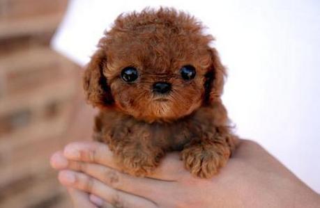 "[i]OMG! Is it real?[/i]  Yes!! The dog's name is Sam and he won the past ""World's Ugliest Dog"""
