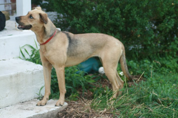 5 Great Reasons To Adopt A Mutt | Care2 Healthy Living