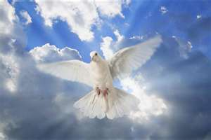 doves bring world peace.espacially white doves.i mean look back at the time when the the whole wide w