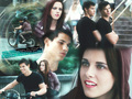 Jacob & Bella - jacob-and-bella wallpaper