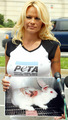 Pamela For Peta - pamela-anderson photo