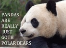 panda are really just Goth Polar Bears