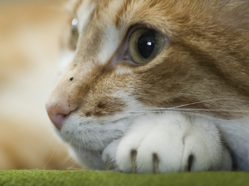 Beautifull cat