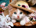 Beautifull cat