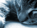 cats - Beautifull cat wallpaper