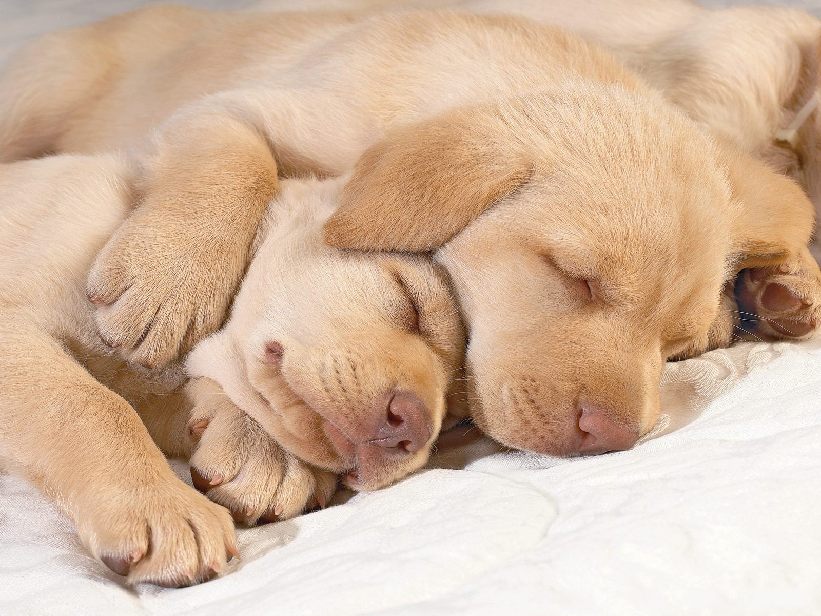 [Image: Cute-puppies-in-hug-puppies-14748941-1600-1200.jpg]