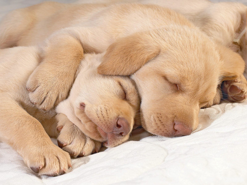Cute puppies in hug