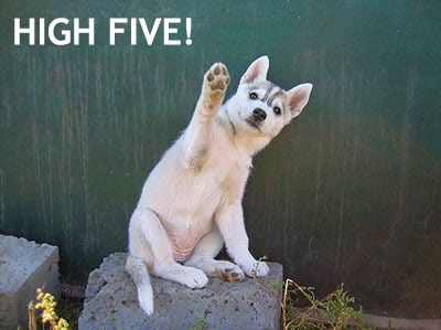 Puppies wallpaper entitled High five!