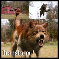 Jacob Transformation  - twilight-series photo