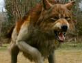 Jacob, wolf form - twilight-series photo