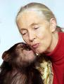 Kiss with Jane - monkeys photo