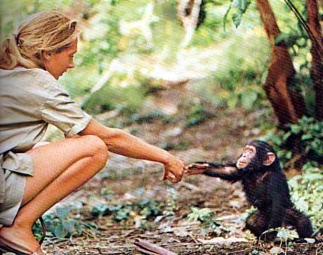 Litlle Monkey  with Jane Goodall - monkeys Photo