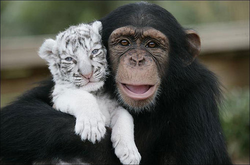 Monkey and litlle tiger. So cute :)