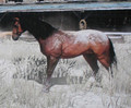 Painted Saddlebred - red-dead-redemption screencap