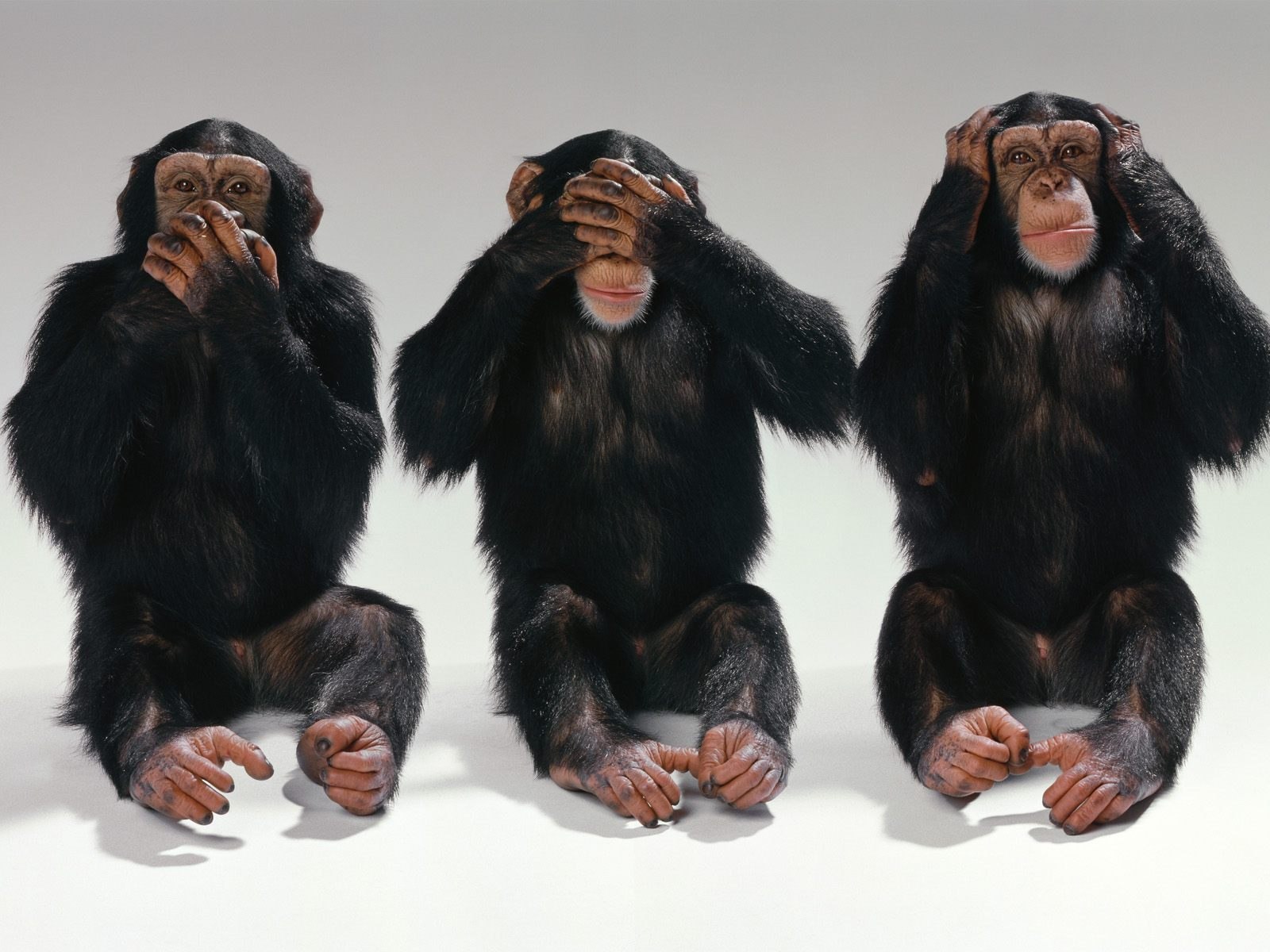 See no evil, hear no evil, speak no evil - monkeys photo