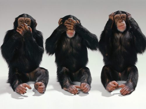 Monkeys wallpaper entitled See no evil, hear no evil, speak no evil