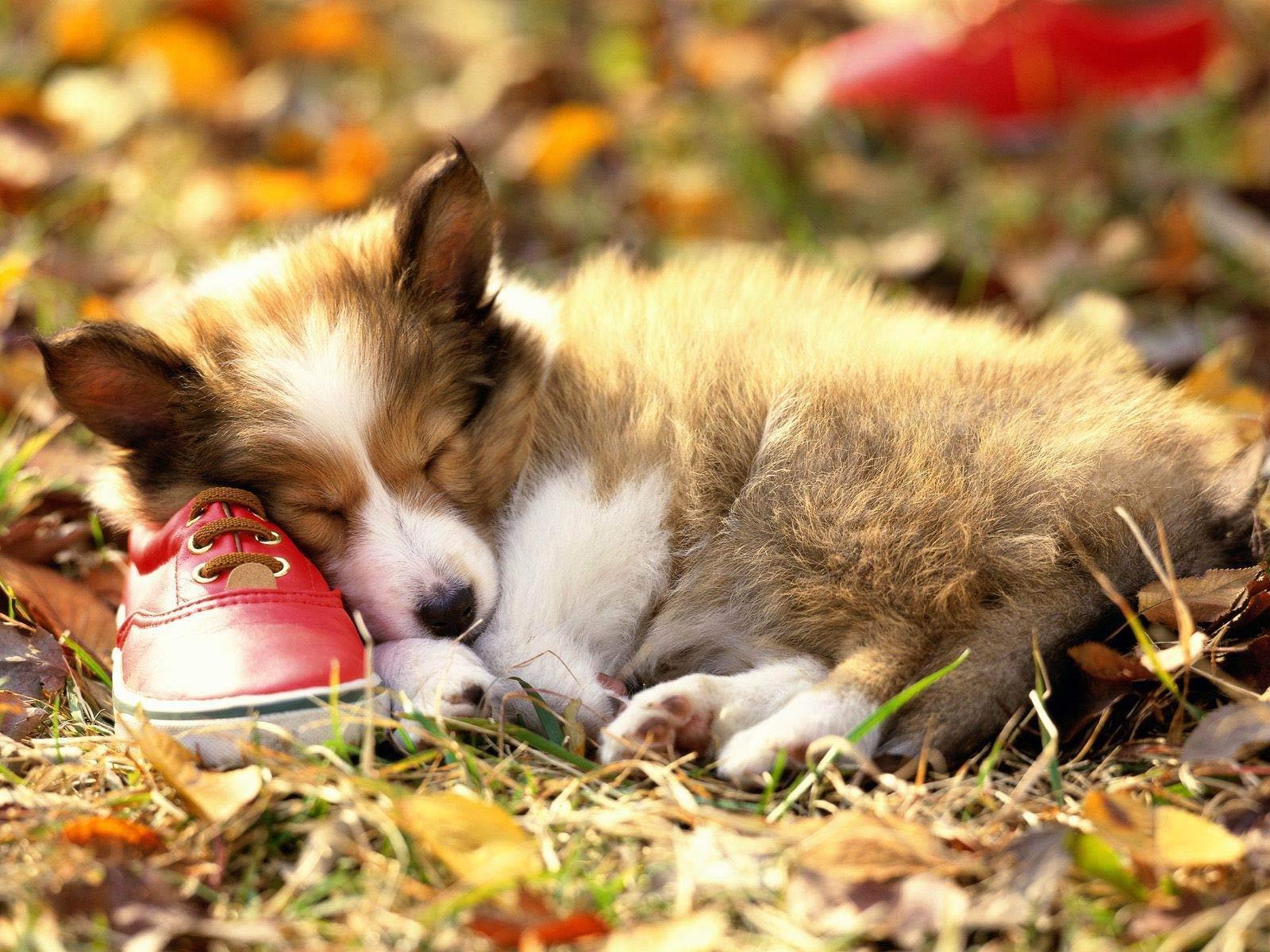 Sleeping in leavs