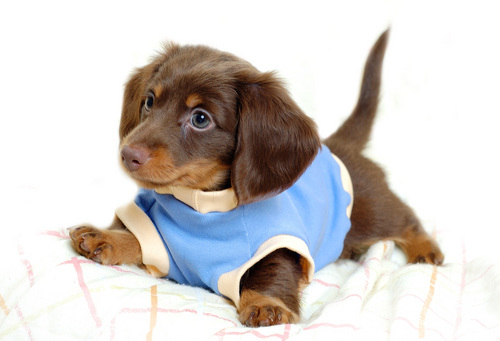 Sweet dogy in sweater - puppies Photo