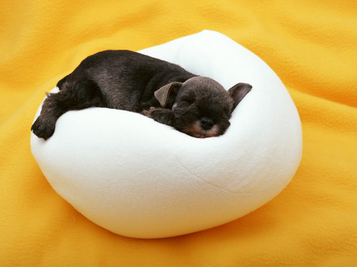 Sweet dogy