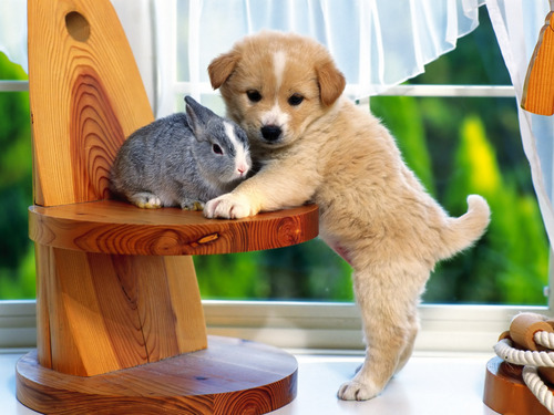 Sweet puppy with bunny