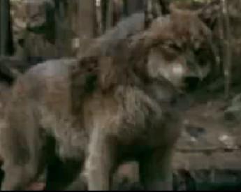 Werewolves twilight series screencap