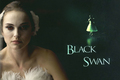 Black Swan Wallpaper
