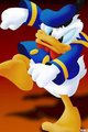 Donald Duck - donald-duck photo