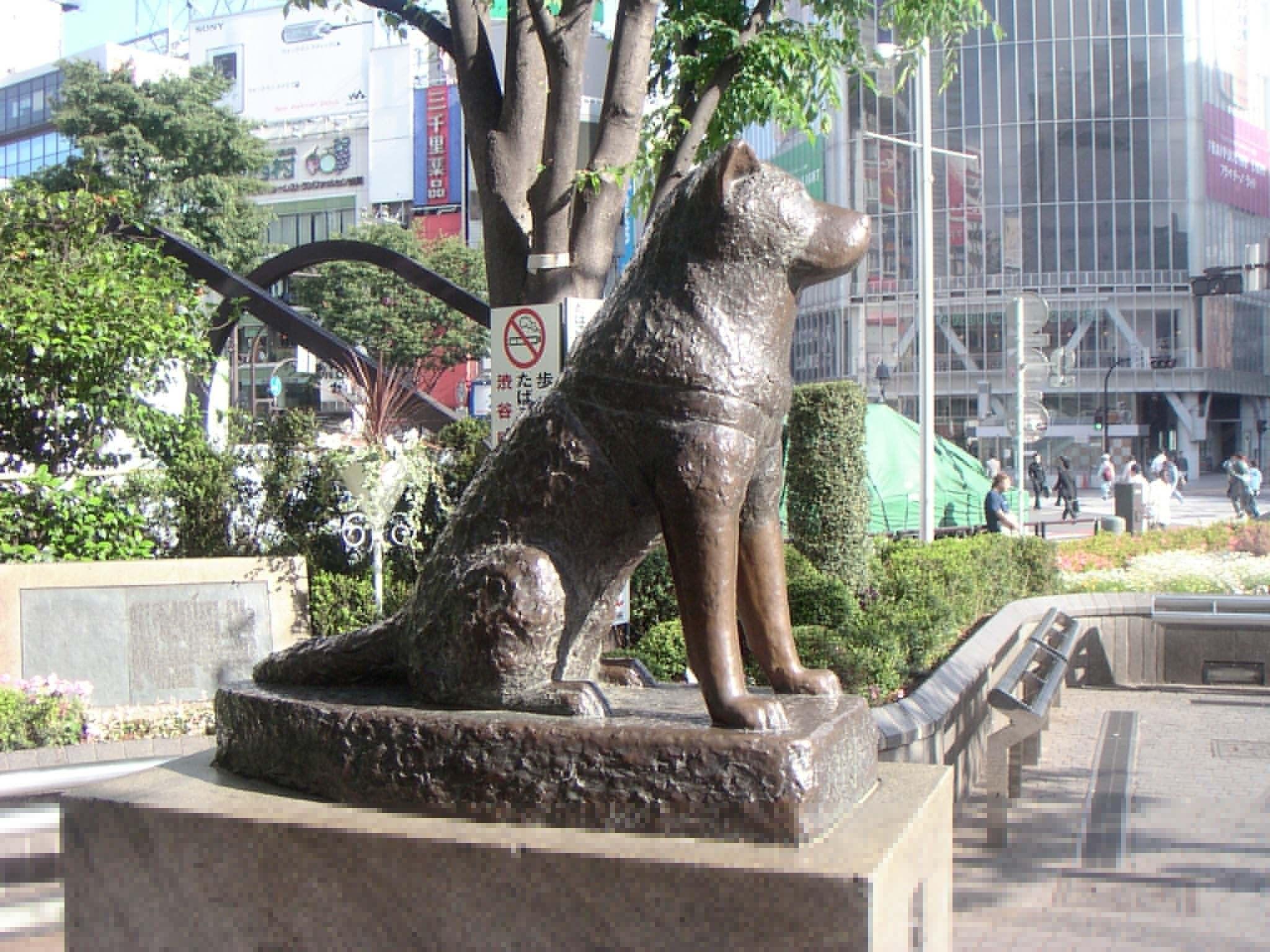 Hachiko A Dogs Story images Hachiko A Dogs Story HD wallpaper and b...