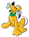 Pluto - disney-animals photo
