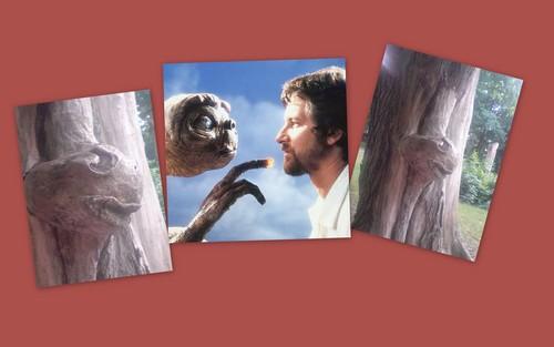 E.T. Natural Monument 2