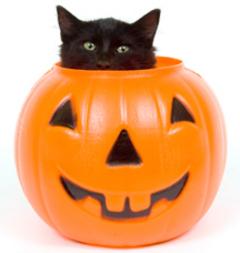 Halloween black cat image