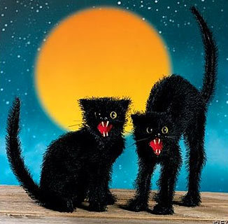 Halloween black cat image