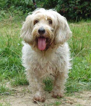 Lovely Dog <3