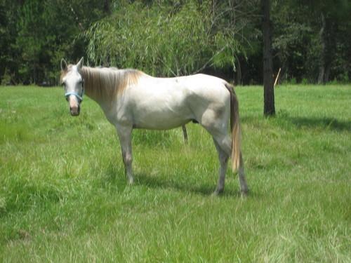 My Quarter Horse