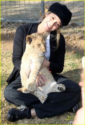 Shakira wallpaper called Shakira Gives Lions Share Of Love