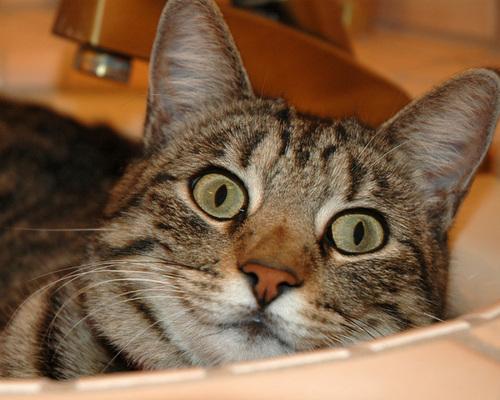 angle cat