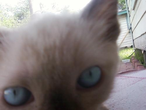 my kitten Blake