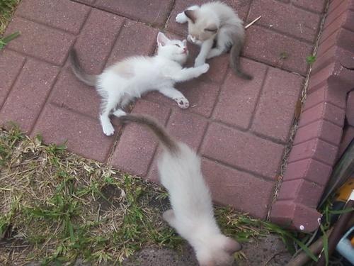 my anak kucing playing