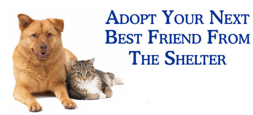 Adopt your next best friend