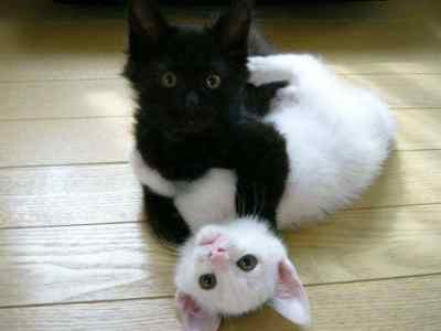 Black and White gatinhos