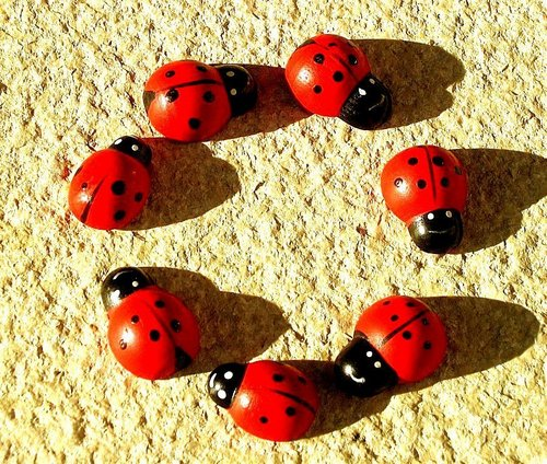 cercle of ladybugs