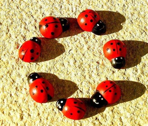 বৃত্ত of ladybugs